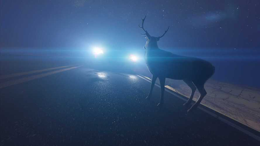 Oh deer! Keep an eye out for animals on the road