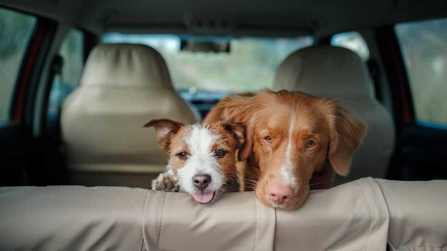 Cães no carro fazem as pessoas dirigir com mais cuidado, diz estudo