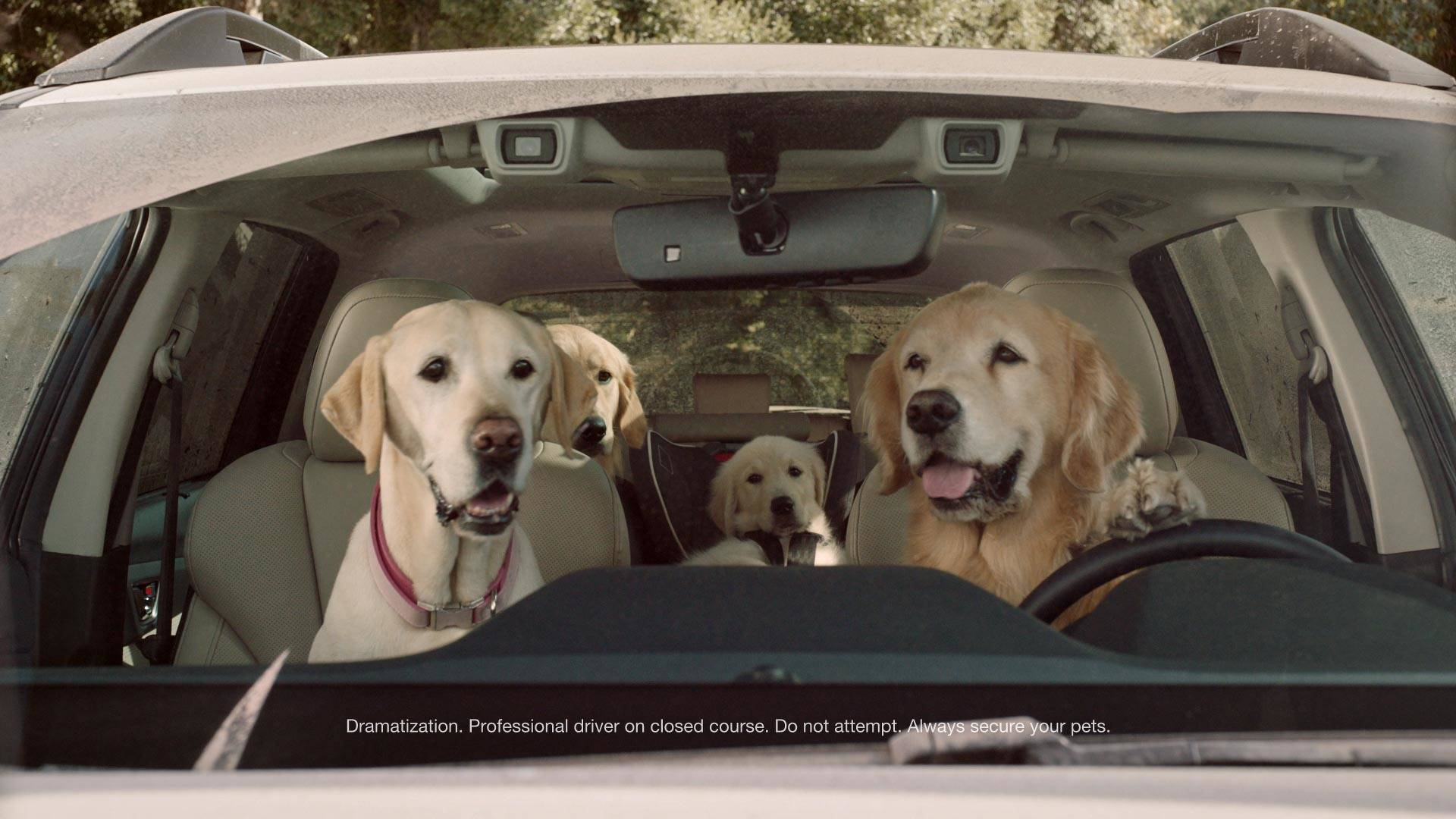 forget the ascent watch subaru s new ads for the cute dogs