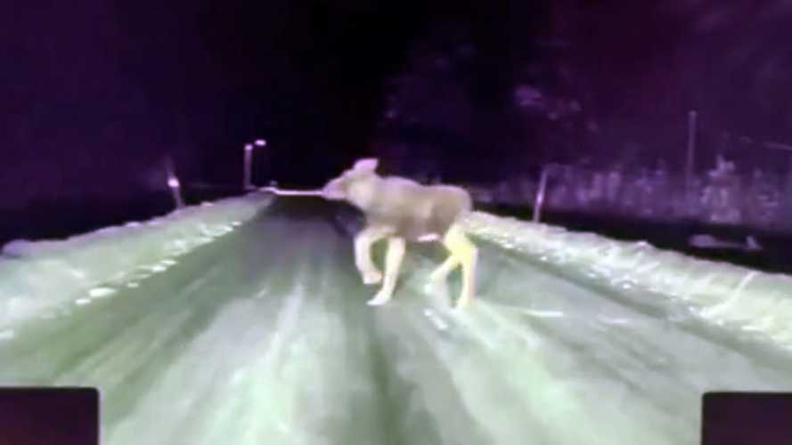 Tesla Model S performs impromptu moose test on dark, icy road