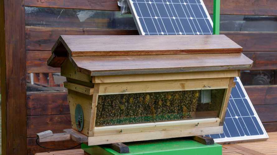 Lamborghini проверяет экологичность своего производства на пчелах
