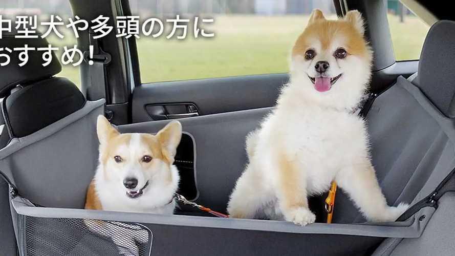 Honda'dan köpek sahiplerine müjde!