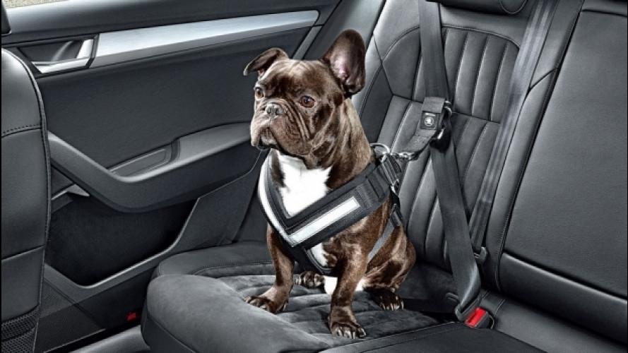 """Cani e gatti in auto: il Ministero dice """"no"""" alla cintura specifica"""