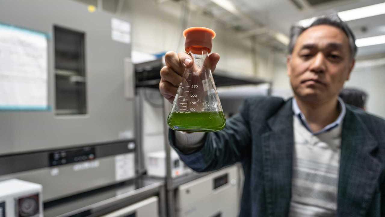 Mazda: Flüssigkraftstoff aus Algen