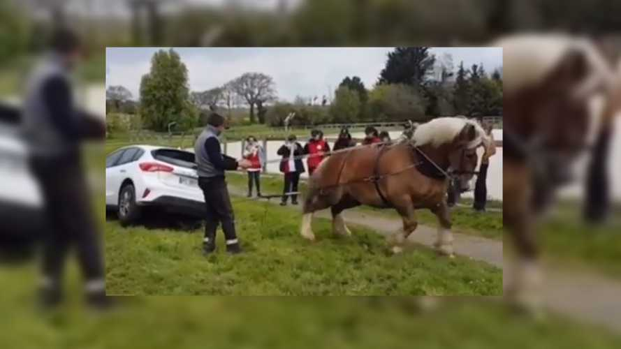 Horse Shows True Power By Pulling Car Out Of Ditch