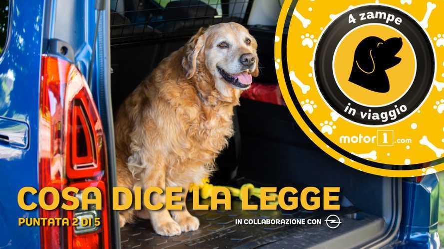 Come trasportare i cani in auto, cosa dice la legge