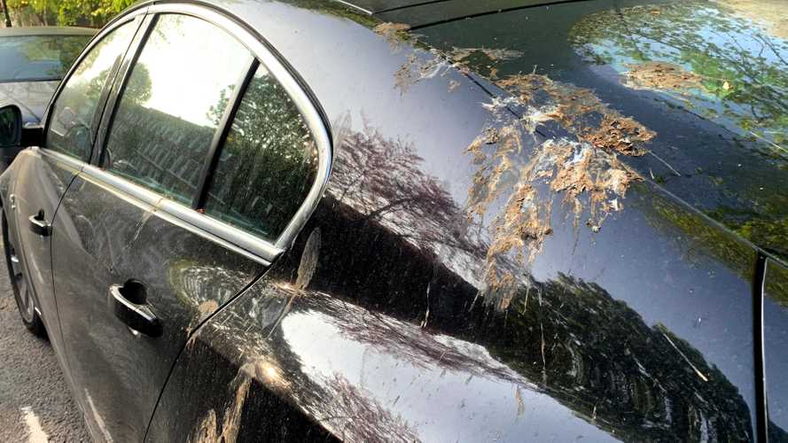 Ford creates fake bird poop for science, and paint protection